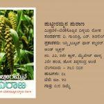 ಮಿಶ್ರಬೆಳೆ - ಬೆರಕೆ ಸೊಪ್ಪಿನ ವಿಸ್ಮಯ ಲೋಕ
